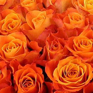 roses-oranges-signification
