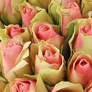 roses-roses-signification