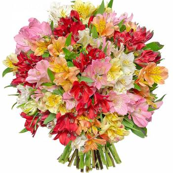 Bouquet de fleurs - Alstroemérias Liberty