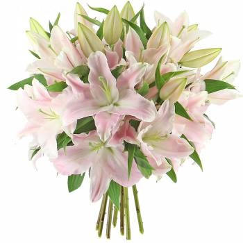Bouquet of flowers - Majestic Pink Lilies