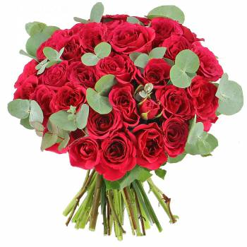 Livraison express : Roses Lovely - Classique