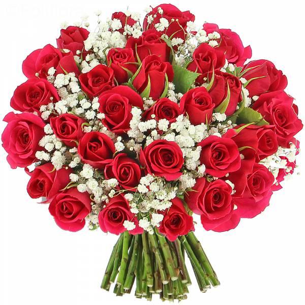 Roses Délice