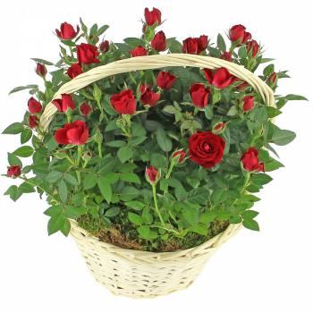 Plante fleurie - Brassée romantique de roses
