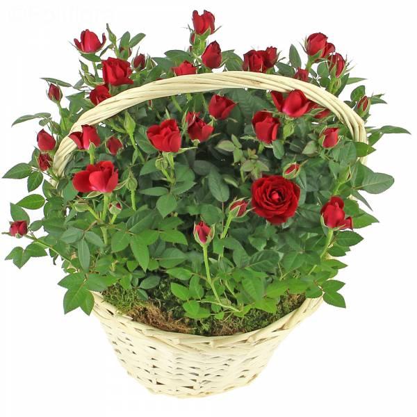 Brassée romantique de roses