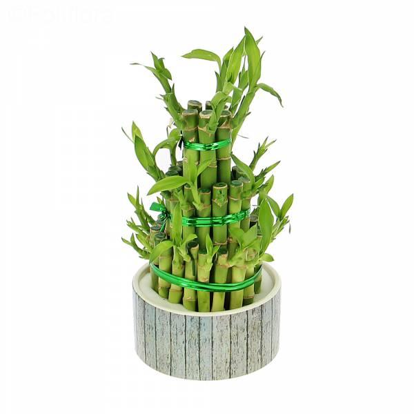 Bambou porte-bonheur