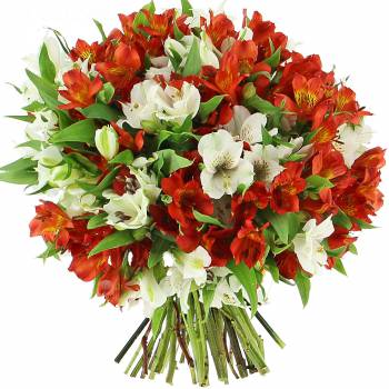 Bouquet of flowers - Peruvian lily