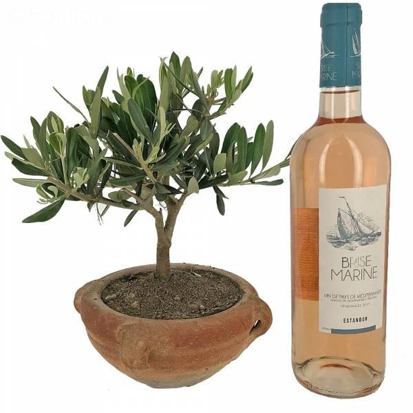 Petit Olivier + Vin Rosé