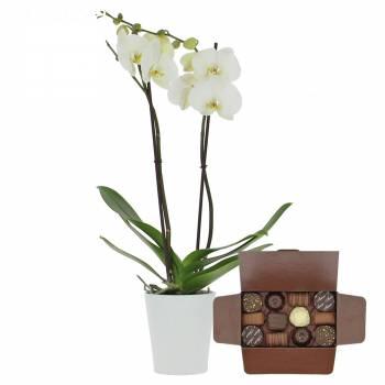 Livraison express : Orchidée de l'amour + Ballotin de chocolats