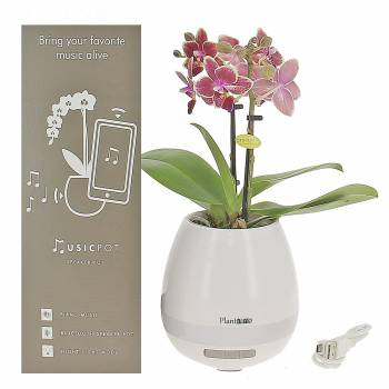Orchid - Orchid - Bluetooth speaker